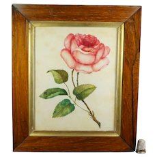 Finest 19th Century Theorem, Floral English Rose Watercolor On Velvet, Georgian Circa 1830