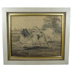 Antique 19th Century Dog Portrait, Spitz, Pomeranian by P H Staines Dated 1869 Toy Breed