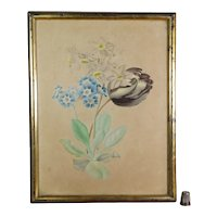 Gorgeous 19th Century French Watercolor Theorem Painting, Tulips, Auricula Circa 1830
