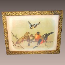 Victorian Print Six Birds and a Butterfly on a Tree Branch Framed in a Victorian Gilt Picture Frame with Morning Glories and Leaves