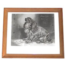 """Vintage Cocker Spaniel Etching """"The Pet of the Duchess"""" Framed Print"""
