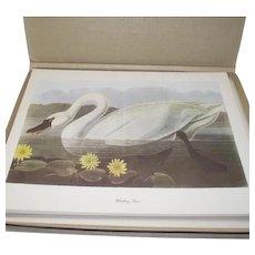 50 Piece Audubon-Birds-of-America Vintage in Original Box