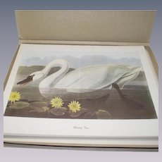 50 Piece Audubon-Birds-of-America Vintage in Original Box
