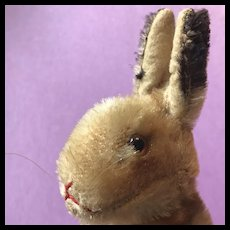 """Steiff Mohair Bunny 5"""" High, Head Swivels,  Loaded with Charm!!"""