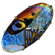 Brooch--Large Vintage Composite Butterfly Wing Design Under Glass in White Metal