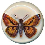 Button--Large Vintage Studio Ben Lang 1967 Laminated Plastic Moth