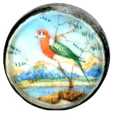 Button--18th C. Georgian Waistcoat Hand Painted Parrot in Habitat Under Glass in Silver