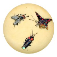 Button--Late 19th C. Stone and Shell Inlay Bugs in Camel Bone--Medium