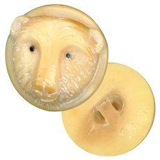 Button--Modern Hand Carved Vegetable Ivory Polar Bear Face--Medium