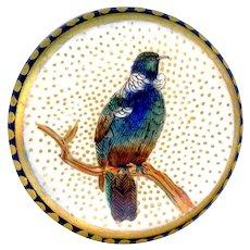 Button--Late 19th C. Fine Satsuma Pottery Ashy Wood Pigeon on Cobalt