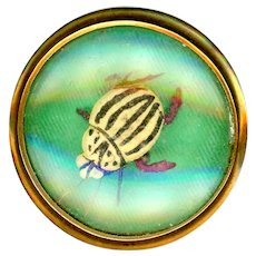 Button--Scarce Early 20th C. Brass Wiggly Bug Under Glass