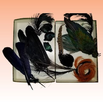 Feathers for Millinery