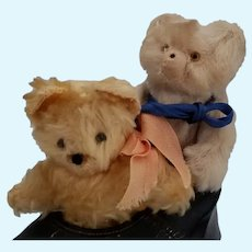 Charming Old Teddy Bears in a Shoe