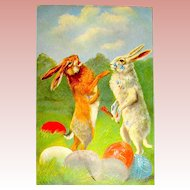 Super German Easter Postcard, Fighting Rabbits, Artist Signed, Near Mint