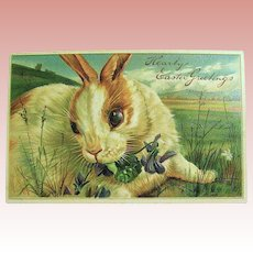 Pristine German Easter Postcard, P.F.B. Large White and Ginger Bunny Rabbit (1 of 2)