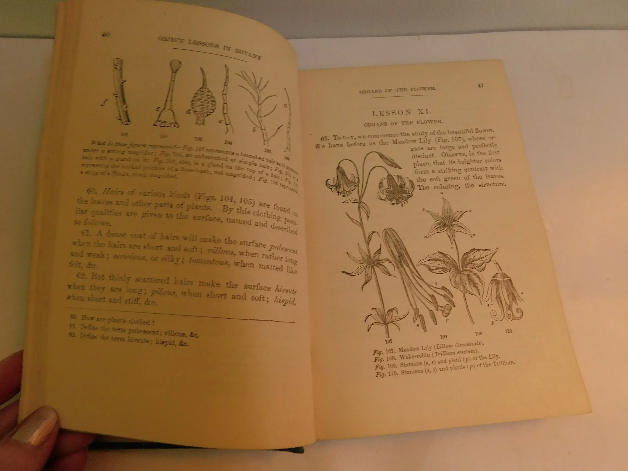 1863 Leaves and Flowers or Object Lessons in Botany with A Flora by  Alphonso Wood 665 illustrations Antique Victorian Book