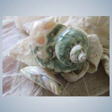 Vintage Green Sea Shell Souvenir Shell Art