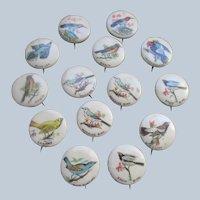 Older Vintage Celluloid Bird Pinback Buttons set 14