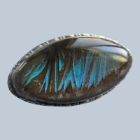 Older Vintage Sterling English Morpho Butterfly Wing Pin