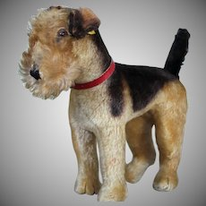 Steiff Terry Airedale Terrier Dog with button and label, 12 inches, 1950