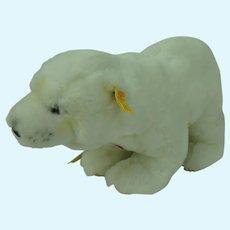 Steiff Cosy Issy Polar Bear Plush