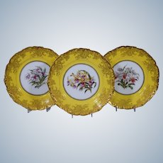 11 Limoges Orchid Plates, Artist Signed, Yellow & Gold