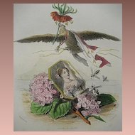 SALE: Original Grandville Signed French Engraving 'Hortensia Couronne Imperiale' 1867 for Les Fleurs Animees.