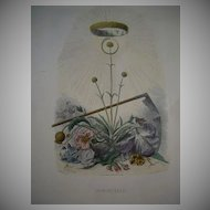 SALE: Grandville Engraving 'Immortelle' from Les Fleurs Animees. 1867.