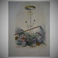 SALE: Grandville Engraving 'Immortelle' from Les Fleurs Animees. 1867.