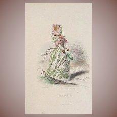Original Grandville Engraving 'Eglantine' 1867 from Les Fleurs Animees.