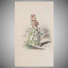 SALE: Grandville Engraving 'Eglantine' 1867 from Les Fleurs Animees.