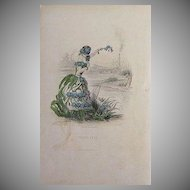 SALE: Grandville Engraving 'Forget Me Not' 1867 from Les Fleurs Animees.