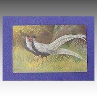 Vintage Pheasant Postcard