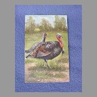 Vintage Turkey Pair Postcard from Europe