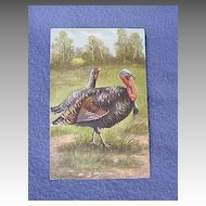 Vintage Turkey Pair Postcard from Europe