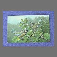 Vintage European Blue Titmouse Postcard