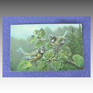 Vintage European Blue Titmouse Postcard