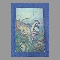 Vintage Woodpecker Postcard from Europe