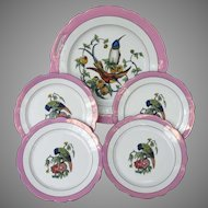 Schwarzenhammer Cake Set with Bee Eaters and Parrots