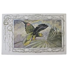 Amazon Parrot Christmas Postcard