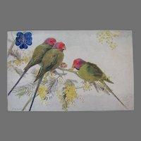 Tuck's Plum-headed Parakeet Postcard