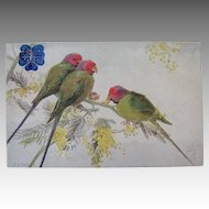 Tuck's Plum-headed Parakeet Postcard