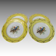 Vintage Germany Cockatoo Macaw Parrot Dessert Plates