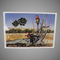 Vintage Rosellas Parrot Postcard from Australia