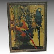 Vintage Art Deco Macaw Framed Stark Davis Print