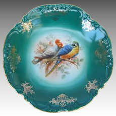 Vintage Turquoise Cabinet Plate from Germany with Macaw and Cockatoo