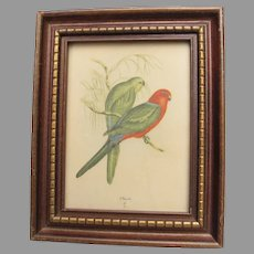 Vintage John Gould King Lory Parrot Framed Print