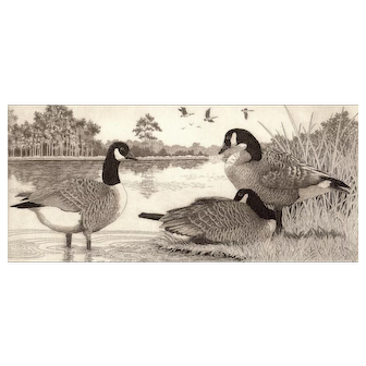 """Original Etching by Listed Artist, David Hunter- """"Trio"""" (Canadian Geese)"""