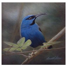 Original Watercolor Painting by Bonnie Latham, Purple Honeycreeper