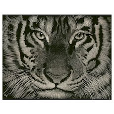 "Original Scratchboard Drawing by Michelle Pattee ""Nassir"""